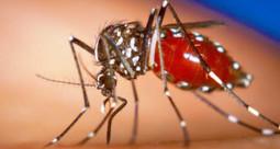 El Virus del #Zika – Lo que necesitas saber | Bitácora Médica | Salud Publica | Scoop.it