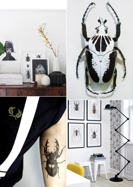 "Atelier Decor: insectos. | ""Interior Styling, Food Styling and Parties"" 