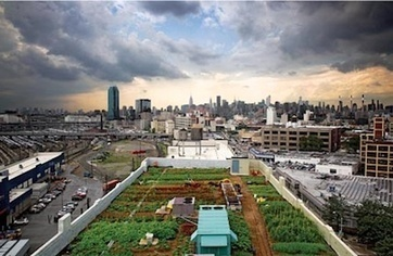 The farm on top of the city — City Farmer News | Urban Farms | Scoop.it