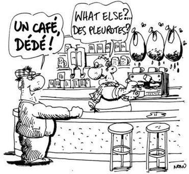Champignons écolos. Cultivés sur du marc de café - Le Télégramme | Grains et Feuilles | Scoop.it