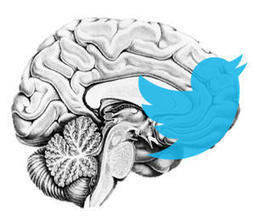 The Neuroanatomy of ideas which are likely to go viral | Managing Technology and Talent for Learning & Innovation | Scoop.it