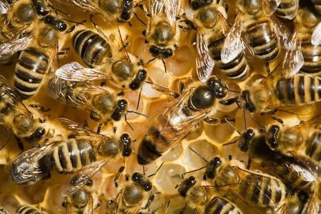 37 Million Dead Bees bring Strong Warnings | Environmental Science | Scoop.it