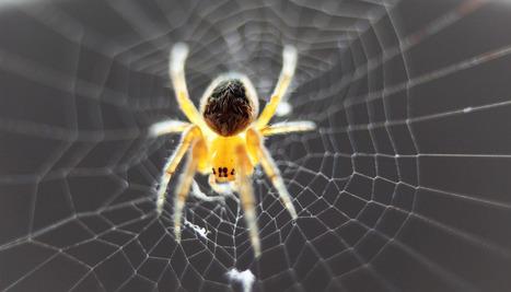 Scientists discover band gaps in spider silk - Futurity | De Natura Rerum | Scoop.it