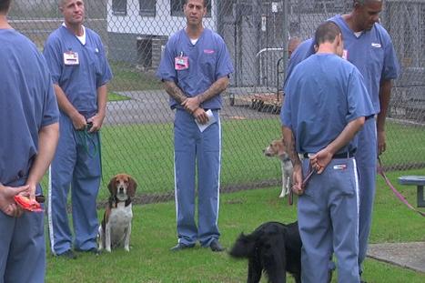 Prison Dog Training Program Changes Lives - wmb... | Pet Health | Scoop.it