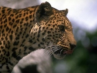 Save The Rainforest Wildlife | Save The Rainforest | Deforestation In The Amazon Rainforest | Scoop.it