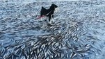 Rapid Freeze Traps Entire School of Fish | > 1,000 Words | Big Think | Green Art Cafe | Scoop.it