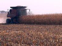Eastern SD Farmers Having Better Fall Harvest | oilseed | Scoop.it