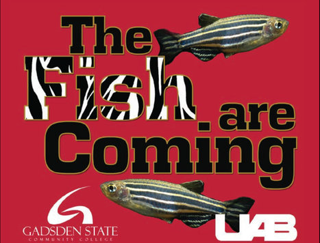 Hands-On Zebrafish Husbandry and Management Course - Gadsden State Community College | Aquaculture Recruitment | Scoop.it
