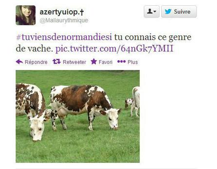 TuViensDeNormandieSi, la communauté normande sur Twitter | Actualités de Rouen et de sa région | Scoop.it