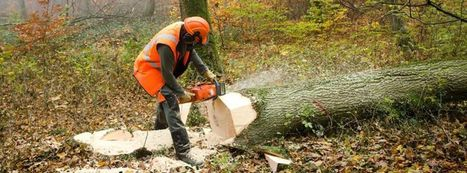 Unsustainable forestry putting UK supply chains at risk   Inspiring Sustainable End-to-End Supply Chain   Scoop.it