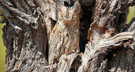 23 camouflages spectaculaires d'animaux qui ne manquent pas de talent   Tiptop Carambar !   Scoop.it