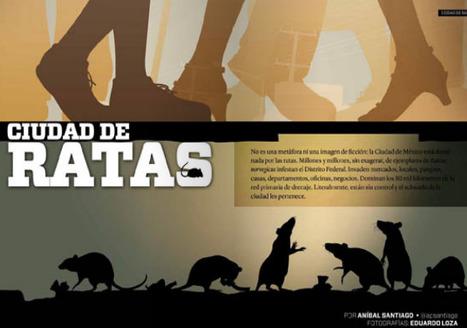 Ciudad de ratas | Periodismo cultural narrativo (crónica, reportaje, entrevista y nuevos formatos) | Scoop.it
