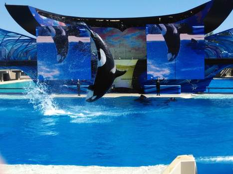 """SeaWorld San Diego: Have a """"Killer Whale"""" of a time! - Singapore's Top (few) Travel Blog - Since May 2011!   2bearbear.com World Travels!   Scoop.it"""
