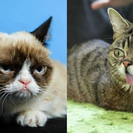 grumpy cat and little bub meet