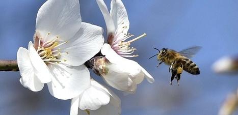 VIDEO. Comment les abeilles captent les champs électriques | Biodiversité | Scoop.it