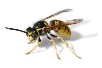 Bed Bugs Treatments Watford   rodulf74   Scoop.it