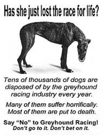 Abuse of Greyhound Dogs In Greyhound Racing | Global, Local, and National Issues | Scoop.it