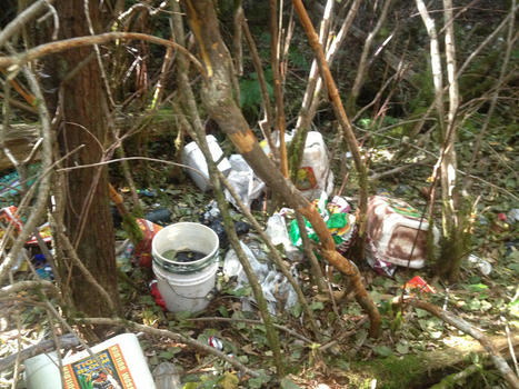 Poisoned Parks: Illegal Marijuana Growers Leave National Parks Trashed ... - NBC Bay Area | Tech Challenge | Scoop.it