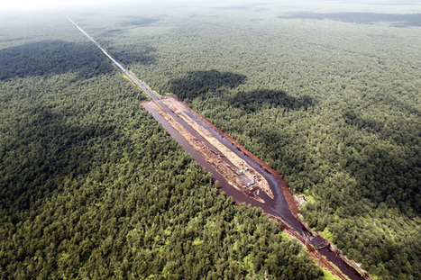 World's forests are fragmenting into tiny patches – risking mass extinctions | GarryRogers NatCon News | Scoop.it