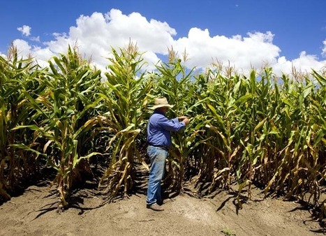 US a cereal offender on ethanol, says UN | RegionalFood | Scoop.it