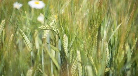 Les 10 clés de l'agro-écologie | Alim'agri | AGRONOMIE VEGETAL | Scoop.it