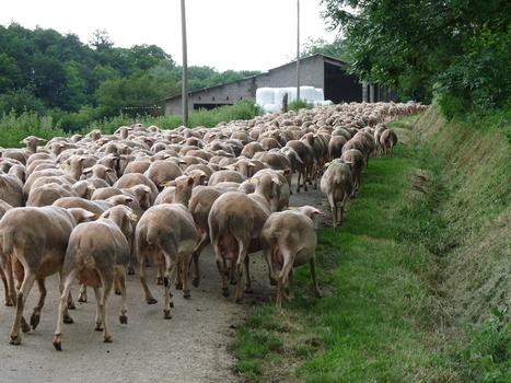 L'agroforesterie au quotidien : un exemple au Gaec de la Bourdarié à Puygouzon | Actualités agricoles LRMP | Scoop.it