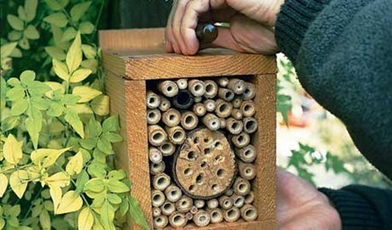 How to make a bug Hotel (: | bancoideas | Scoop.it