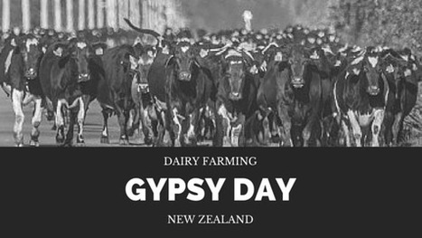 Dairy Farming Gypsy Day, New Zealand | Waibury Agricultural Farm Investments | Scoop.it