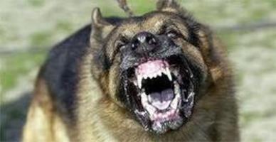 Cincinnati Dog Bite Attorney   Mason, Ohio Pers...