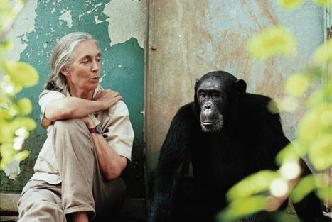 Happy Birthday, Jane Goodall! | Ending the Use of Animals in Science | Scoop.it