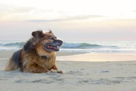In Spiaggia nelle Marche con i Nostri Amici Animali | Le Marche un'altra Italia | Scoop.it