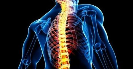 Scientists May Have Found Protein That Could Help Unlock Spinal Regeneration in Humans | Medical Researches | Scoop.it