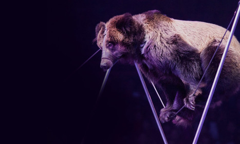 Join Animals Asia's campaign to help end animal performance cruelty | Science and Nature | Scoop.it