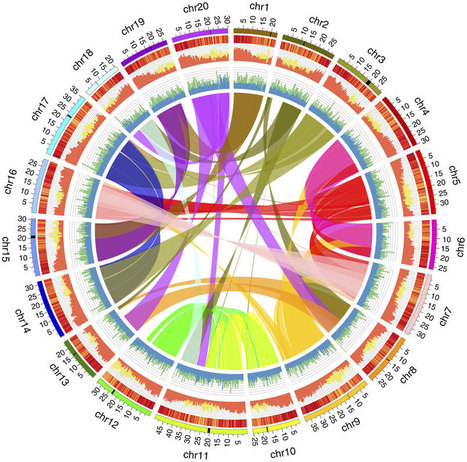 The Camelina sativa genome. : The emerging biofuel crop Camelina sativa retains a highly undifferentiated hexaploid genome structure : Nature Communications : Nature Publishing Group | Crop Genomics, NGS and Bioinformatics | Scoop.it