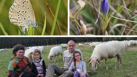 Le paysan, le papillon, la gentiane et la fourmi - Ouest-France | EntomoNews | Scoop.it