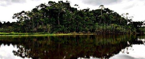 Amazzonia, a rischio più della metà delle specie di alberi | Erba Volant - Applied Plant Science | Scoop.it