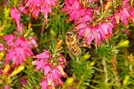 Plants to help bees through a warm winter | The Times | Organic Farming | Scoop.it