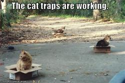 The cat traps are working | Funny and crazy cats | Scoop.it