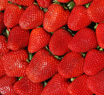 Sustainable strawberry initiative awards $2.6 million in grants | The Grower | Humboldts Secret | Scoop.it