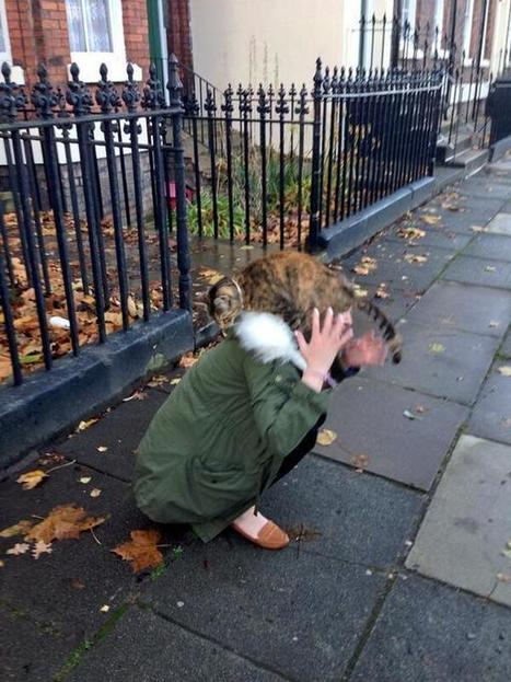 Twitter / adelinaboci: Don't make friends with random ...   petsblogs   Scoop.it