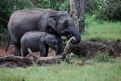 Best Monsoon Destinations to Explore Wildlife in India | About India | Scoop.it