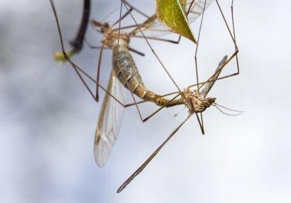 Des milliers de photos d'insectes dans le domaine public ! - Romaine Lubrique | Innovation sociale | Scoop.it