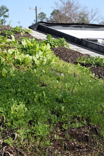 Living Green Roofs!: Green Roof Gardening and Small Scale Rooftop Permaculture | Cultivos Hidropónicos | Scoop.it