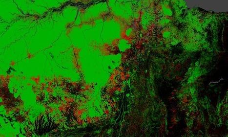 Reforestation for bioenergy: Brazil-US massive plan - Bioenergy Crops   Bioenergy Crops   Scoop.it