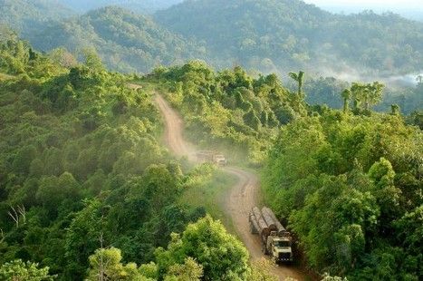 Indonesia to extend ban on forest clearing   The Glory of the Garden   Scoop.it