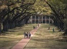 12 Most Amazing Tree Tunnels - The Weather Channel | Oak Alley Plantation: Things to see! | Scoop.it