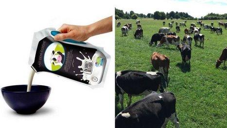 Ils prennent leur destin en main : ces agriculteurs lancent leur marque de lait. Et ça marche ! | Chronique d'un pays où il ne se passe rien... ou presque ! | Scoop.it