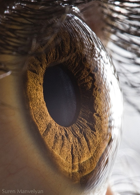 Extreme Close Ups Of Human Eyes - Enpundit   The Body Electric   Scoop.it