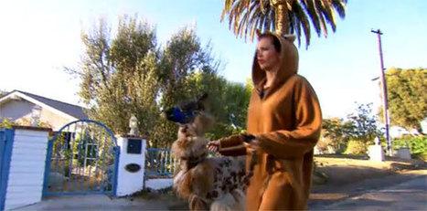 'Lama-drama' in Astrid in Wonderland | actua cedric | Scoop.it