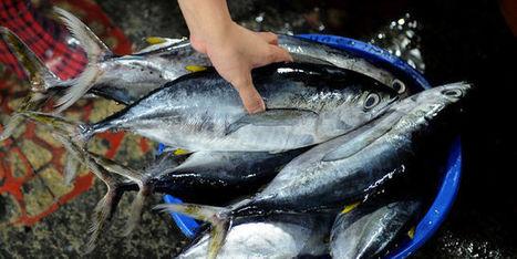 Polémique autour du label «pêche durable» | Mer & Enseignements | Scoop.it
